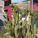 30 cactus garden-H900